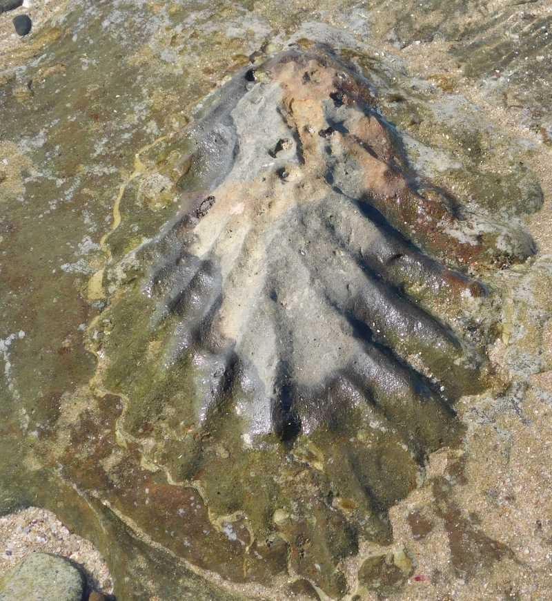 Mzamba Fossils & Petrified Forest